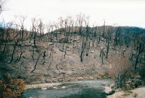 Bushfires_aftermath,_Big_River_near_Anglers_Rest.Wikipedia